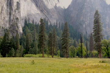 Cathedral Meadows, Yosemite