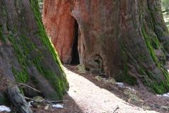 Sequoias Mariposa