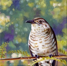 """Summer Visitors - Shining Cuckoo"". Oil on canvas, 20x20cm, SOLD"