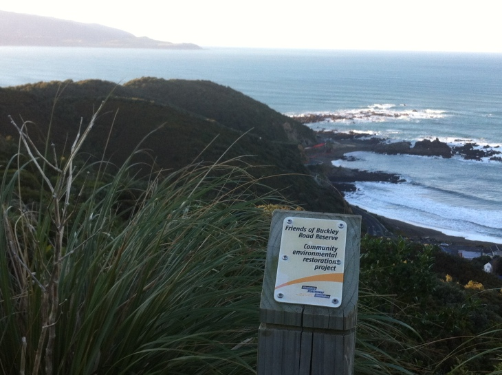 Buckley Road Reserve on the South Coast, Wellington