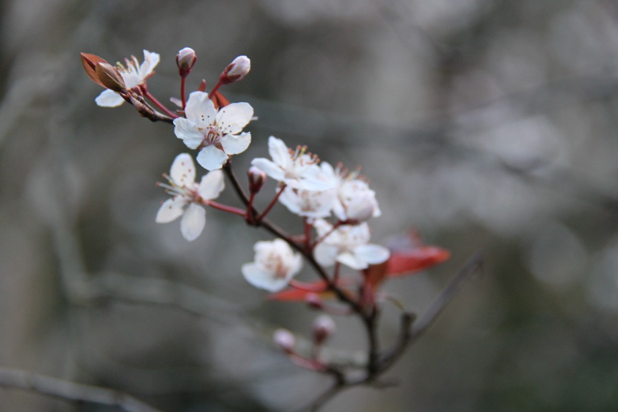 The Hope ofSpring