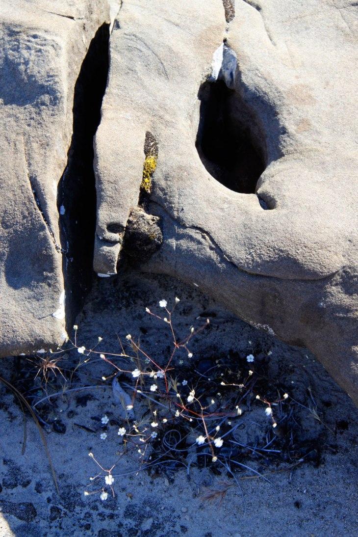 Ventana-Rocks